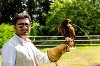 Nigel flies a Harris Hawk
